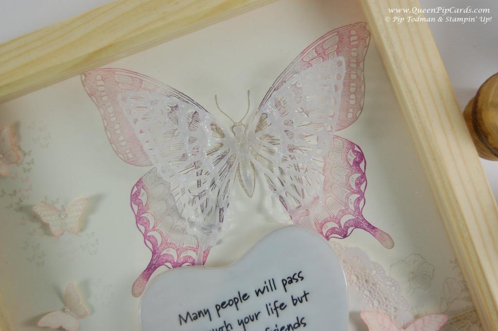 Butterfly Frame_V_0161