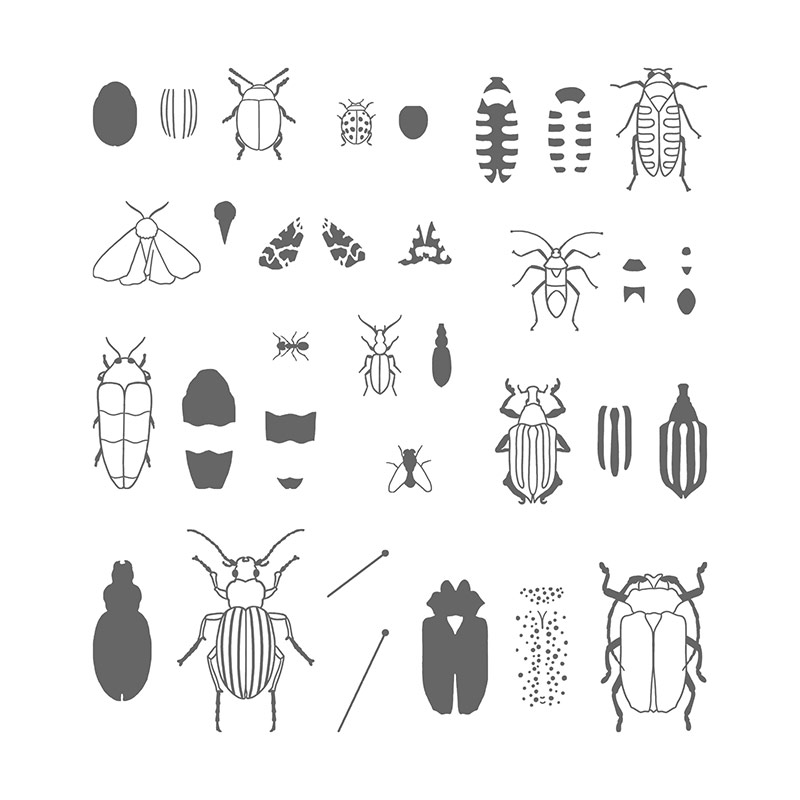 Buy Beetles and Bugs