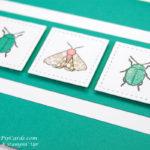 Buy Beetles and Bugs