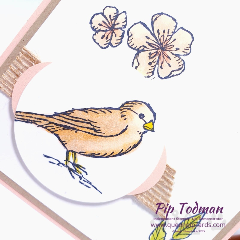 Free As A Bird sneak peek with the Greek Isles Achievers Blog Hop. A pretty delicate card with birds and flowers in soft Petal Pink. Pip Todman www.queenpipcards.com Stampin' Up! Independent Demonstrator UK